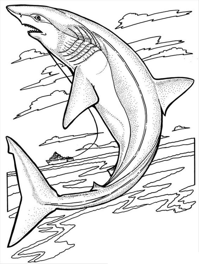 pdf Free Printable Shark Coloring Pages For Kids for toddlers