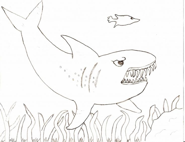 for teens Free Printable Shark Coloring Pages For Kids for boys