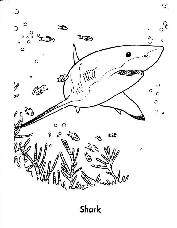 for boys Free Printable Shark Coloring Pages For Kids for boys