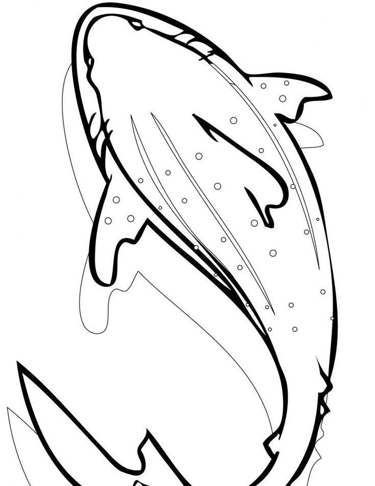pdf Free Printable Shark Coloring Pages For Kids free printable