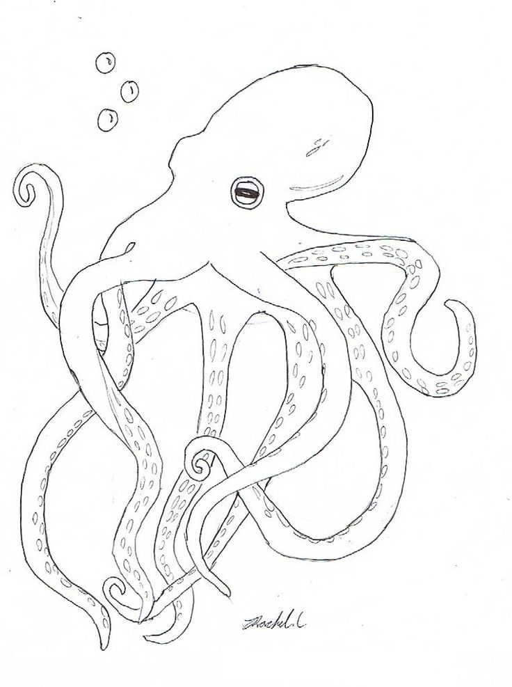 pdf Free Printable Octopus Coloring Pages For Kids for boys