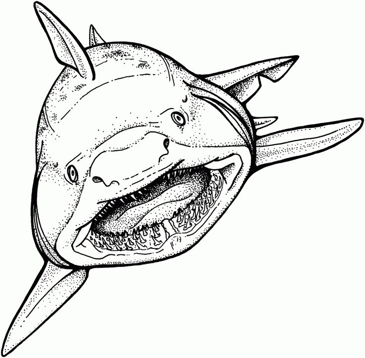 for kids Free Printable Shark Coloring Pages For Kids for teens
