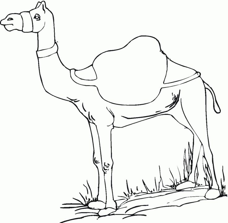 free Free Printable Camel Coloring Pages For Kids for teens