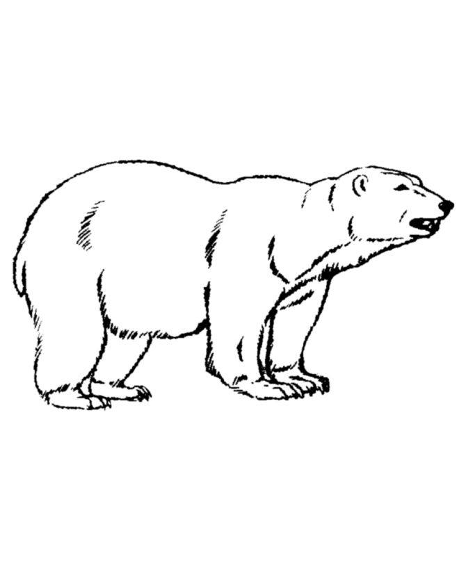to print out Free Printable Polar Bear Coloring Pages For Kids for kindergarten