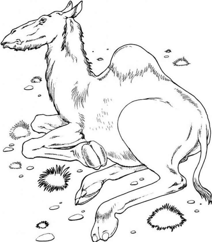 free printable Free Printable Camel Coloring Pages For Kids for teens