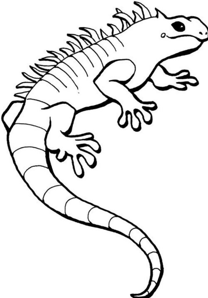 to print out Free Printable Iguana Coloring Pages For Kids free printable