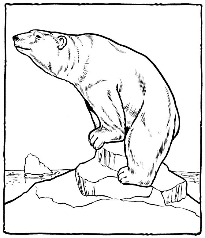 easy Free Printable Polar Bear Coloring Pages For Kids for adults