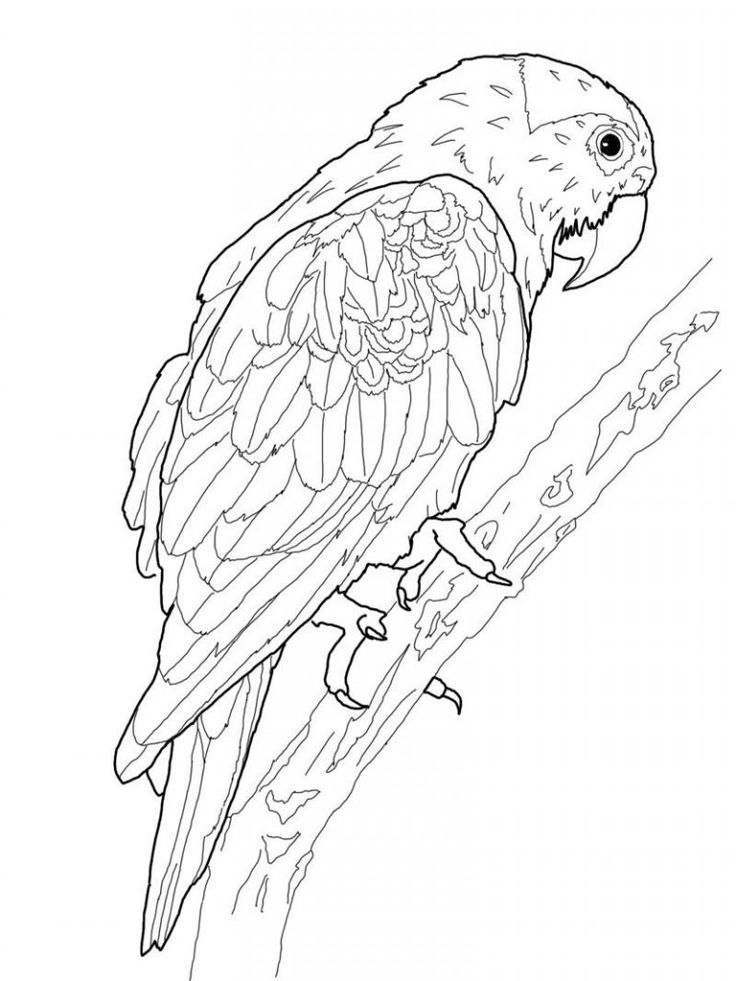 free printable Free Printable Parrot Coloring Pages For Kids to print out