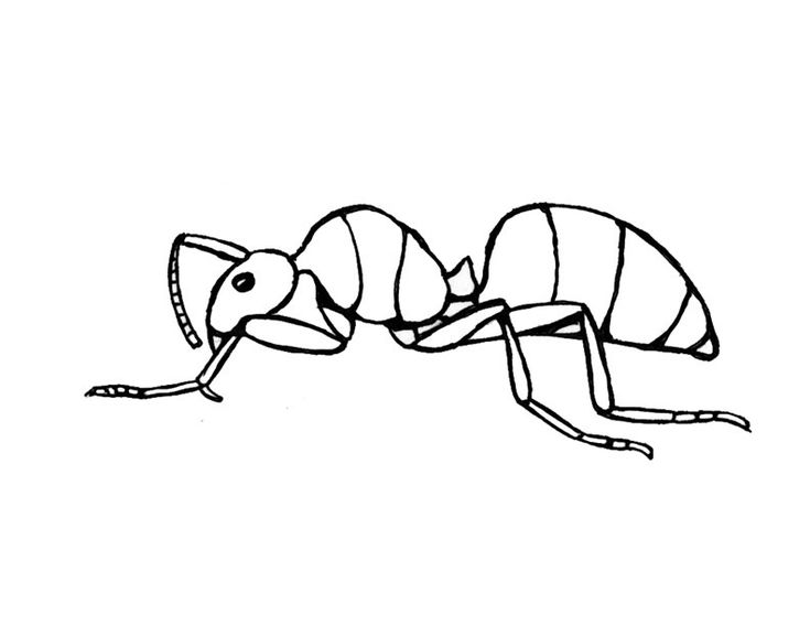 for sunday school Free Printable Ant Coloring Pages For Kids for kindergarten