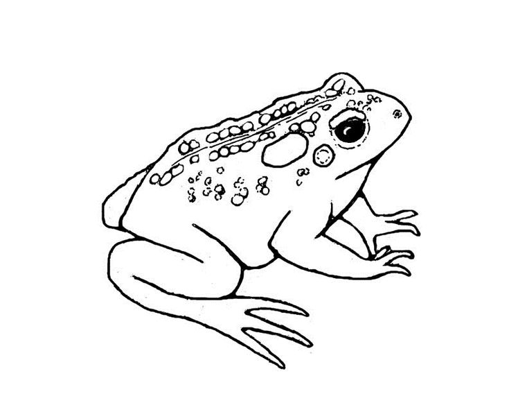for teens Free Printable Toad Coloring Pages For Kids for boys