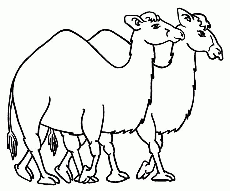 for kids Free Printable Camel Coloring Pages For Kids simple