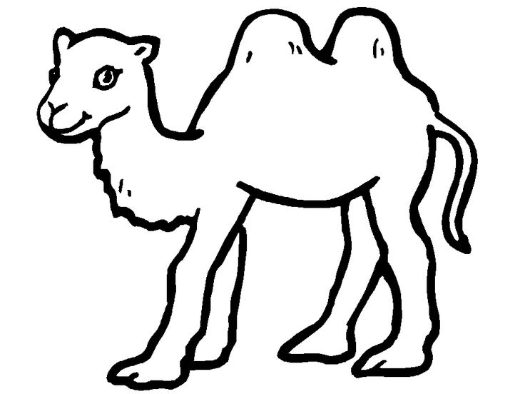 for kids Free Printable Camel Coloring Pages For Kids pdf
