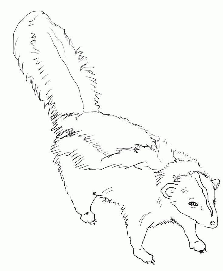 printable Free Printable Skunk Coloring Pages For Kids for girls