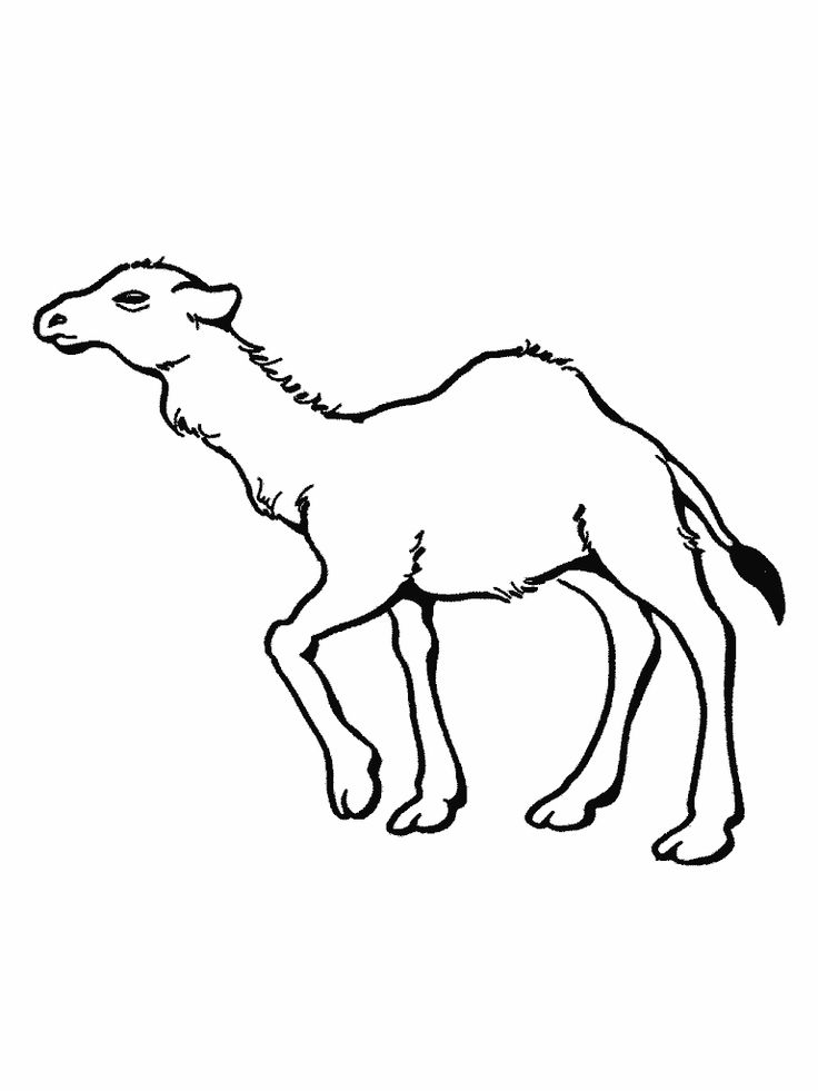 to print out Free Printable Camel Coloring Pages For Kids for girls