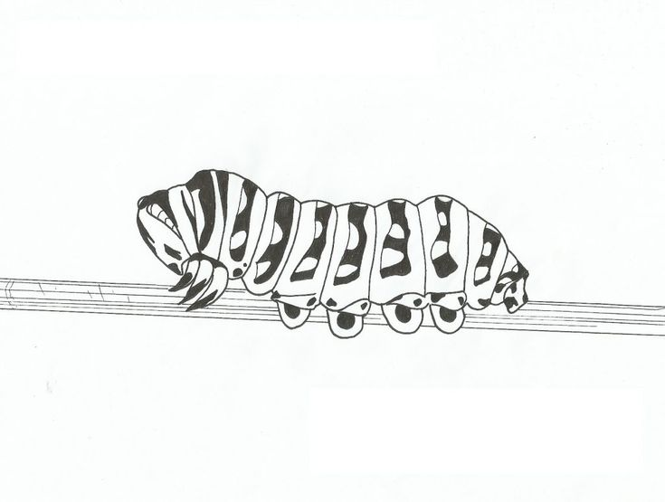 free printable Free Printable Caterpillar Coloring Pages For Kids free