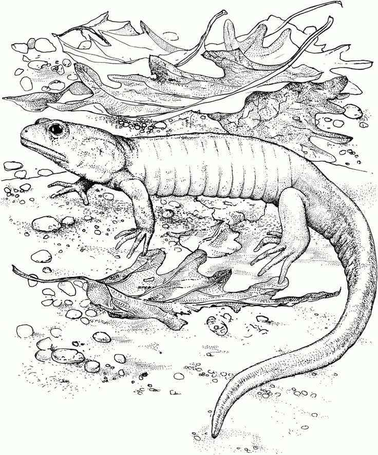 pdf Free Printable Lizard Coloring Pages For Kids free