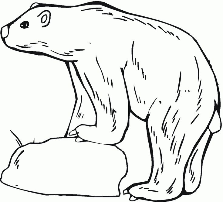 already colored Free Printable Polar Bear Coloring Pages For Kids for adults