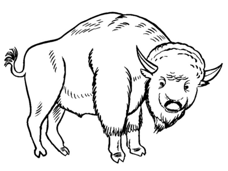 for girls Free Printable Bison Coloring Pages For Kids free printable