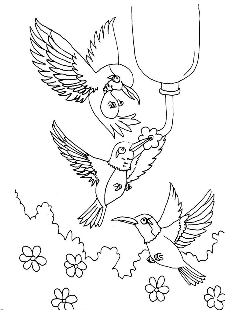 for kids Free Printable Hummingbird Coloring Pages For Kids easy