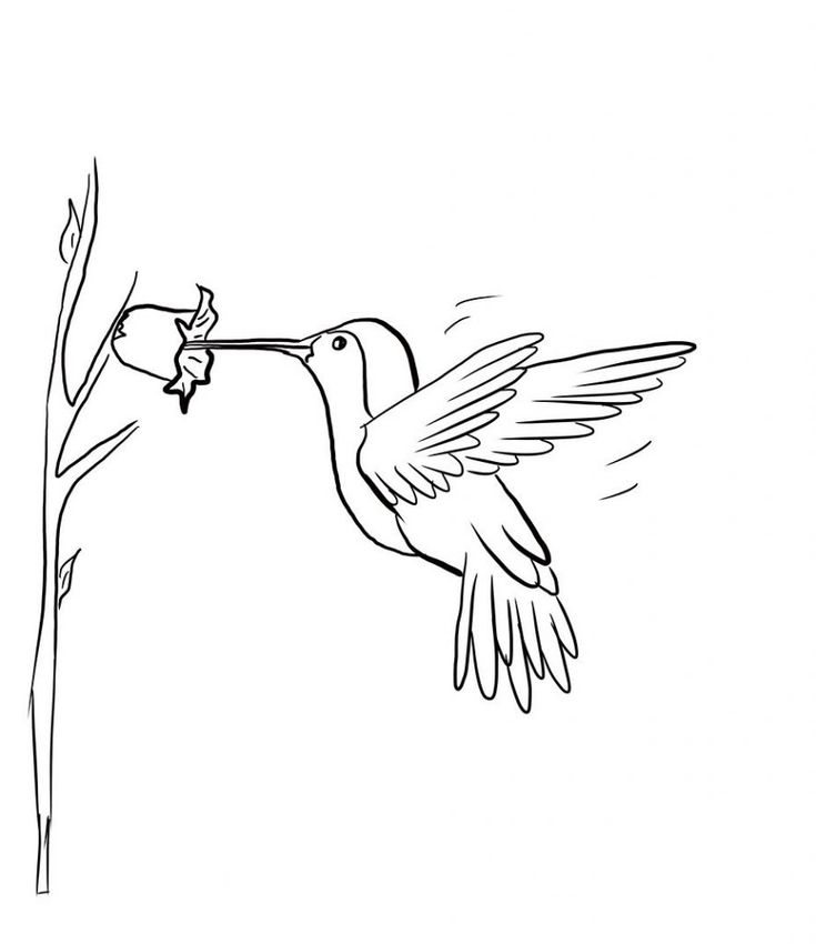 pdf Free Printable Hummingbird Coloring Pages For Kids for kindergarten