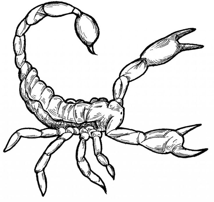 free Free Printable Scorpion Coloring Pages For Kids for sunday school