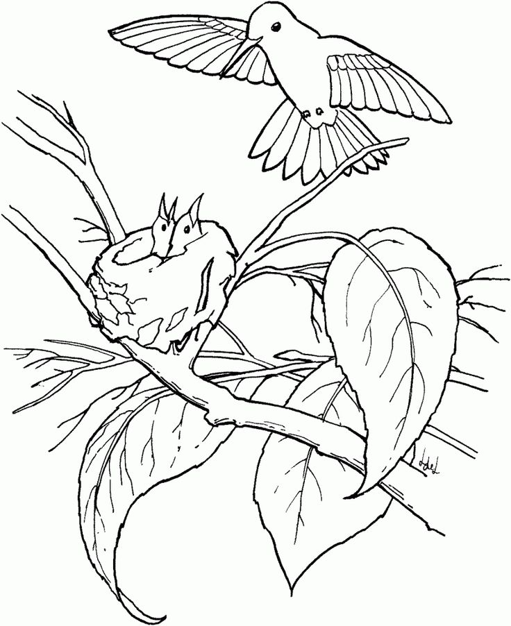 simple Free Printable Hummingbird Coloring Pages For Kids already colored