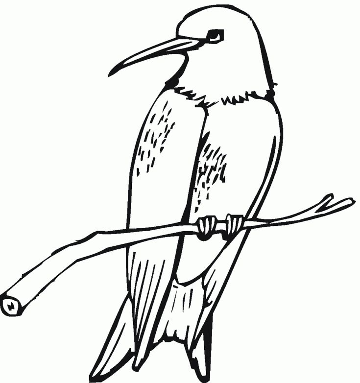 to print out Free Printable Hummingbird Coloring Pages For Kids pdf