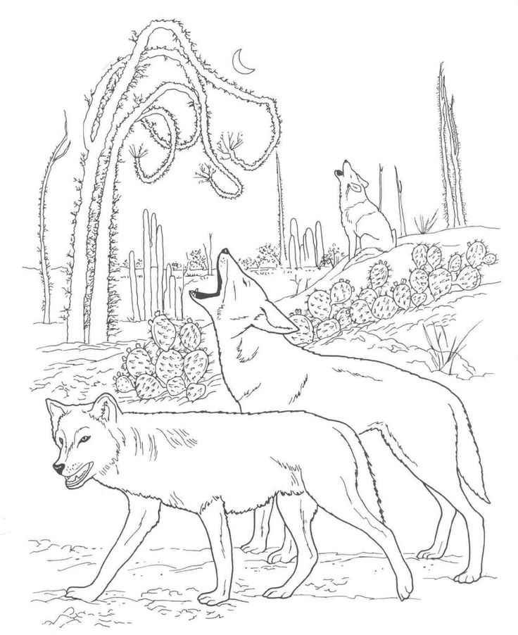 for toddlers Free Printable Coyote Coloring Pages For Kids free
