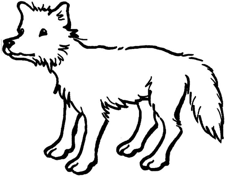 printable Free Printable Coyote Coloring Pages For Kids pdf