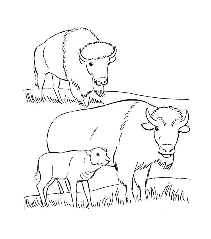 for sunday school Free Printable Bison Coloring Pages For Kids free printable